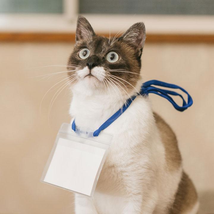 猫の手も借りたい業界はこちら